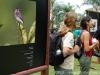 festival-aves-de-paraty-28