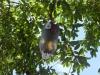 aves-de-paraty-natal-2013-0
